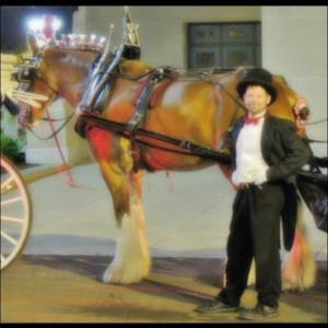 Claddagh Carriage Company - Horse Drawn Carriage / Wedding Services in St Louis, Missouri