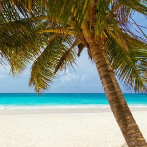 Coconut Party Rental