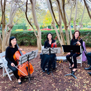 Dallas Asian Strings - String Quartet / Classical Ensemble in McKinney, Texas