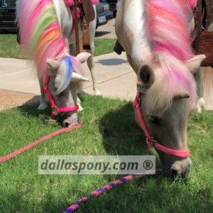 Dallas Pony - Pony Party in Dallas, Texas