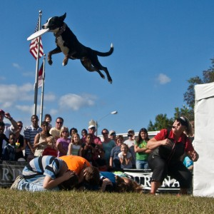 Dare Devil Dogs - Animal Entertainment / Sports Exhibition in Lincolnton, North Carolina