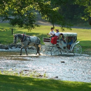 Dayze Gone Bye Carriage Rides - Horse Drawn Carriage in Allensville, Pennsylvania