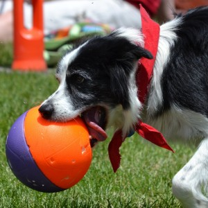 Dazzle Dogzz - Animal Entertainment in West Jordan, Utah