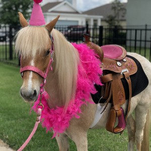 Divinity Stables - Pony Party in Spring Hill, Florida