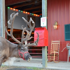 Double R Reindeer Ranch - Holiday Entertainment in Midlothian, Texas