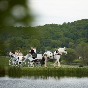 Equine Elegance - Horse Drawn Carriage / Prom Entertainment in Jonesborough, Tennessee
