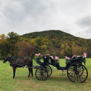 Valley View Horse & Carriage - Horse Drawn Carriage / Princess Party in Sevierville, Tennessee