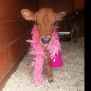 Farm Babies 2 Go (affordable) - Petting Zoo / Children's Party Entertainment in Holliston, Massachusetts
