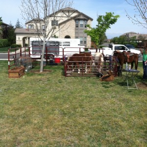 Ford Farms Mobile Petting Zoo - Petting Zoo / Pony Party in Exeter, California