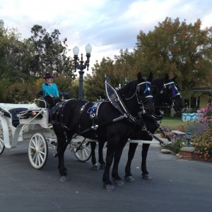 Fresno Carriage - Horse Drawn Carriage / Holiday Party Entertainment in Fresno, California