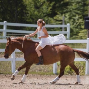 From Wild to Mild: The American Mustang - Animal Entertainment in Morristown, New Jersey