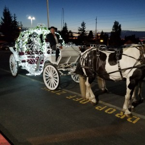 Gala Horse Drawn Carriage Rides - Horse Drawn Carriage / Prom Entertainment in Lake Stevens, Washington