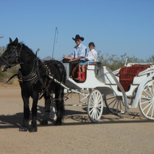 GE Carriages - Horse Drawn Carriage in Tucson, Arizona