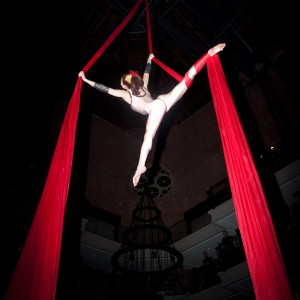 Gina DeFreitas - Aerialist / Balloon Twister in Boston, Massachusetts