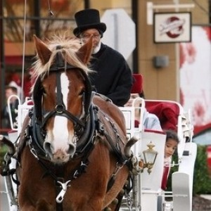 Glass Slipper Carriage Tours - Horse Drawn Carriage / Prom Entertainment in Tuscaloosa, Alabama