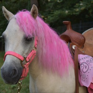 Half Pint Pony Parties and Petting Zoo - Pony Party / Party Rentals in Bullard, Texas
