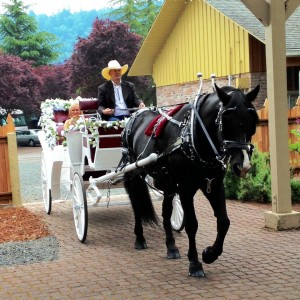 Heartland Carriages - Horse Drawn Carriage / Wedding Services in Springfield, Oregon