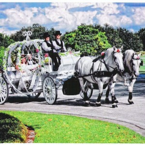 HighHorse Carriage Rides, Inc. - Horse Drawn Carriage / Princess Party in Orlando, Florida