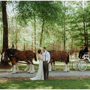 Honey Island Clydesdales - Horse Drawn Carriage in Pearl River, Louisiana