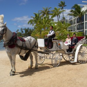 Honolulu Horse and Carriage - Horse Drawn Carriage / Holiday Party Entertainment in Honolulu, Hawaii