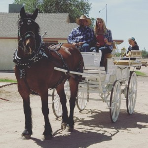 Horse Drawn Carriages for Any Event - Horse Drawn Carriage in Lancaster, California