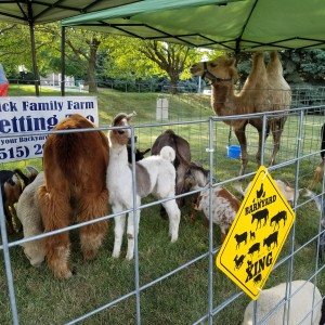 Hovick Family Farm Petting Zoo - Petting Zoo / Children's Party Entertainment in Roland, Iowa