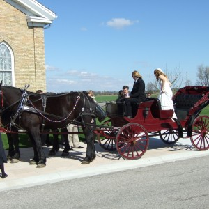 Humes Horse and Carriage Rides - Horse Drawn Carriage / Prom Entertainment in London, Ontario