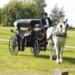 L & M Carriage Service - Horse Drawn Carriage in Appleton, Wisconsin
