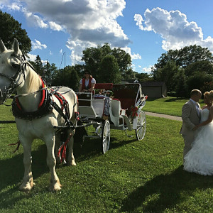 Ladybug Ranch LLC - Horse Drawn Carriage / Princess Party in Atwater, Ohio