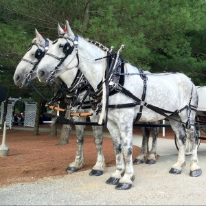 Liberty Farm - Horse Drawn Carriage / Pony Party in Harrisville, Rhode Island