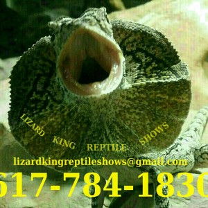 Lizard King Reptile Shows - Reptile Show in Whitman, Massachusetts