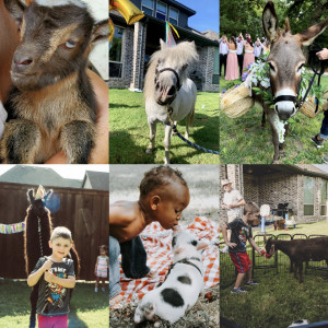 Llamazing Party Animals - Petting Zoo / Family Entertainment in Palmer, Texas