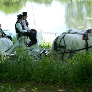 Loon Meadow Farm - Horse Drawn Carriage / Wedding Services in Saratoga Springs, New York
