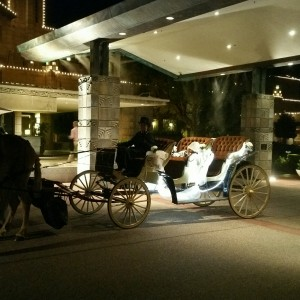 Lottie Ponies Livery and Carriage, LLC - Horse Drawn Carriage / Cajun Band in Scottsdale, Arizona