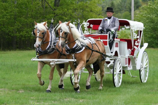 Hire Meadow Creek Farm Of Maine Horse Drawn Carriage In