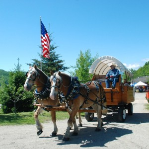 Meadow Creek Farm of Maine - Horse Drawn Carriage / Wedding Services in Sumner, Maine