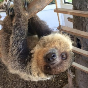 Mini S Exotic Zoo, LLC - Petting Zoo / College Entertainment in Mineola, Texas
