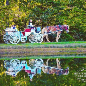 Mississippi Smooth Carriage Service.llc - Horse Drawn Carriage in New Albany, Mississippi