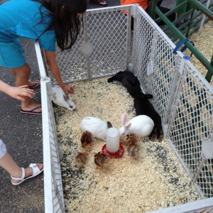 Mountainside Stables - Petting Zoo in Lafayette, New Jersey