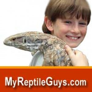 Reptile Birthday Party Guys