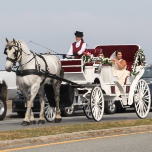 New Deal Horse & Carriage - Horse Drawn Carriage / Wedding Services in Saunderstown, Rhode Island