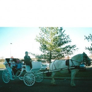 New Freedom Horse Drawn Carriages LLC - Horse Drawn Carriage / Princess Party in Monroeville, New Jersey