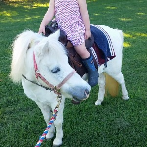 Painted pony rides - Pony Party in Aurora, Indiana