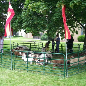 Party Animals - Petting Zoo in North Tonawanda, New York
