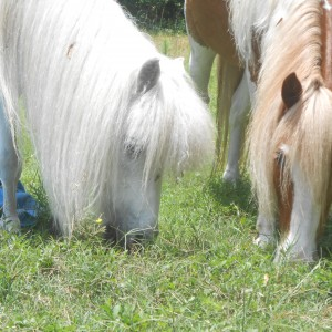 Party Ponies of Savannah - Pony Party / Petting Zoo in Savannah, Georgia