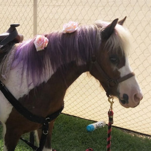Pegasus Ponies - Pony Party in Whittier, California