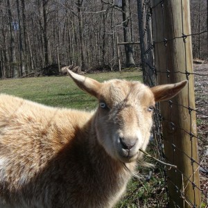 Perfectly Planned - Petting Zoo in Mount Laurel, New Jersey