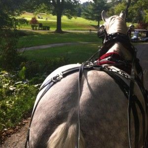 Perfectly Planned - Horse Drawn Carriage in Mount Laurel, New Jersey