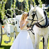 Pinto Carriage Works, LLC - Horse Drawn Carriage / Party Decor in Jacksonville, Florida
