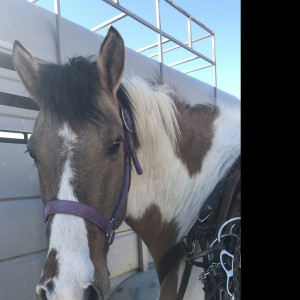 Ponies for Parties - Pony Party in Alma, Colorado